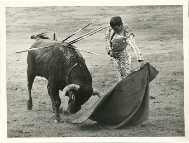 Torero at Bullfight Enticing Bull with Muleta