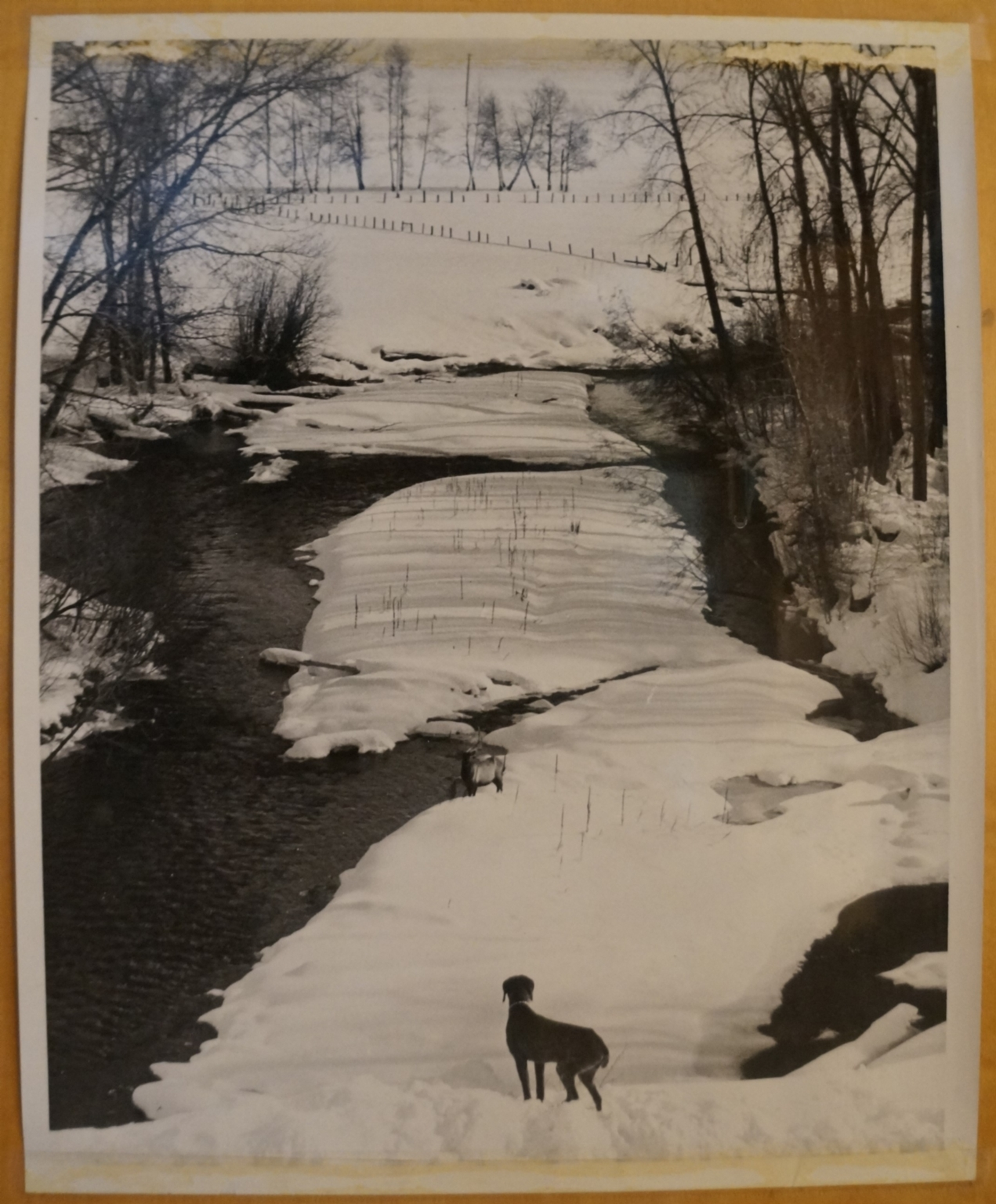 Dog at River in Winter